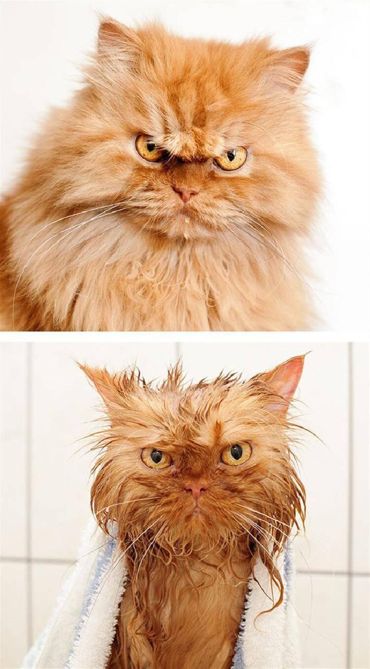 8 котов, принявших ванну!