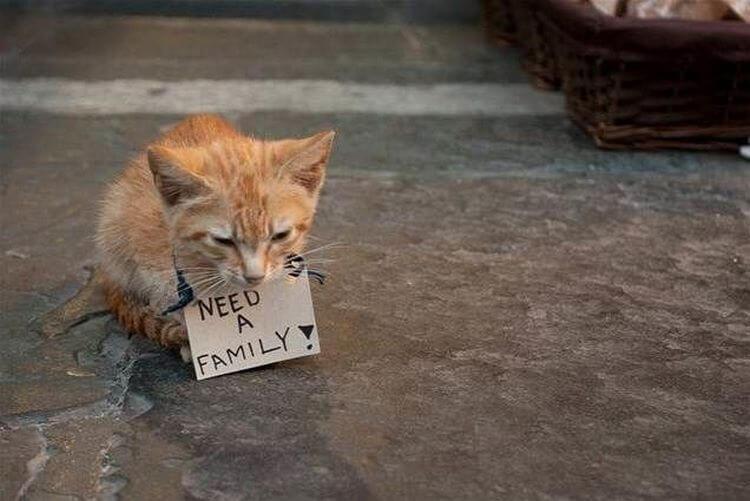 Штраф 10 тысяч Евро или 12 месяцев тюрьмы за выброшенное животное в Италии!